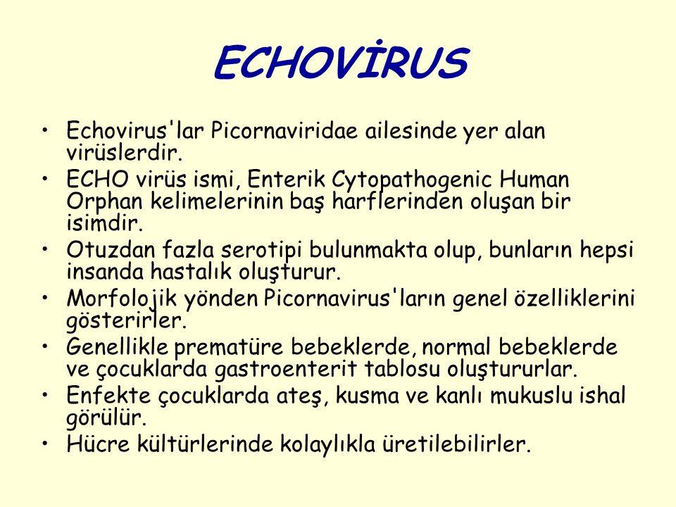 ECHOVİRUS Echovirus lar Picornaviridae ailesinde yer alan virüslerdir.