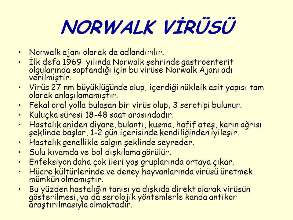 NORWALK VİRÜSÜ Norwalk ajanı olarak da adlandırılır.