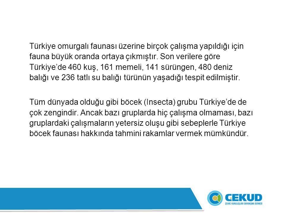 Türkiye omurgalı faunası üzerine birçok çalışma yapıldığı için fauna büyük oranda ortaya çıkmıştır. Son verilere göre Türkiye'de 460 kuş, 161 memeli, 141 sürüngen, 480 deniz balığı ve 236 tatlı su balığı türünün yaşadığı tespit edilmiştir.