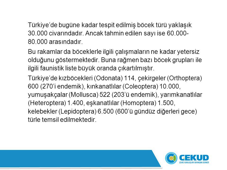 Türkiye'de bugüne kadar tespit edilmiş böcek türü yaklaşık 30