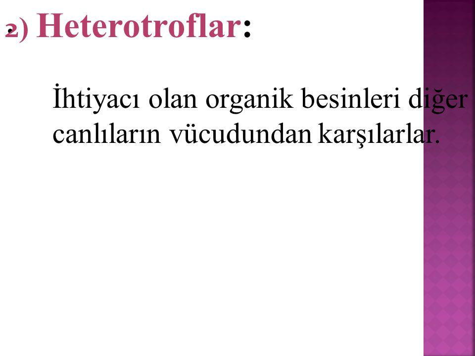 . 2) Heterotroflar: İhtiyacı olan organik besinleri diğer canlıların vücudundan karşılarlar.