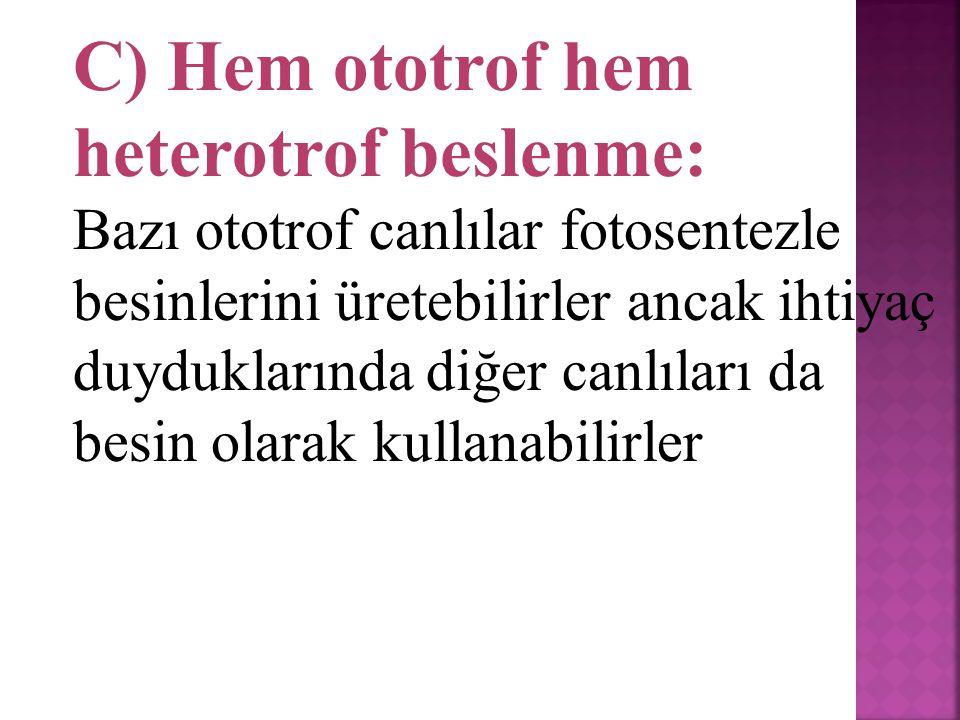 C) Hem ototrof hem heterotrof beslenme: Bazı ototrof canlılar fotosentezle besinlerini üretebilirler ancak ihtiyaç duyduklarında diğer canlıları da besin olarak kullanabilirler