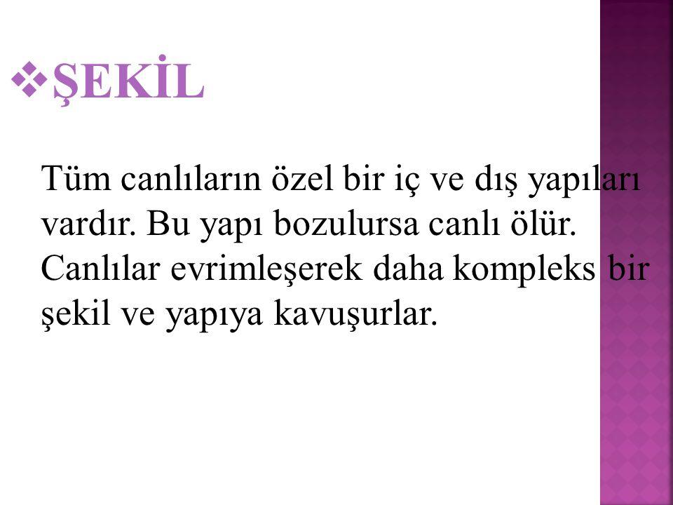 ŞEKİL