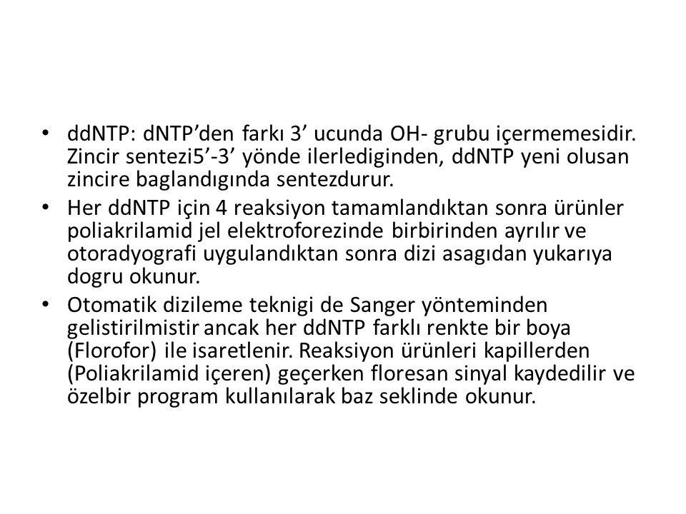 ddNTP: dNTP'den farkı 3' ucunda OH- grubu içermemesidir