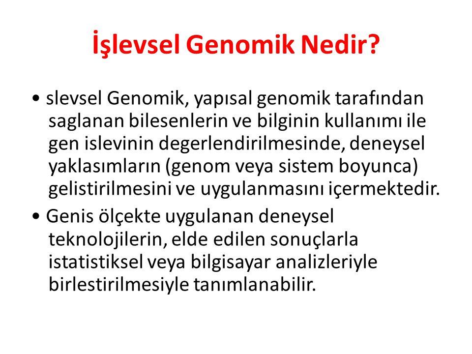 İşlevsel Genomik Nedir