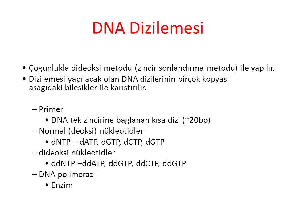 DNA Dizilemesi • Çogunlukla dideoksi metodu (zincir sonlandırma metodu) ile yapılır.