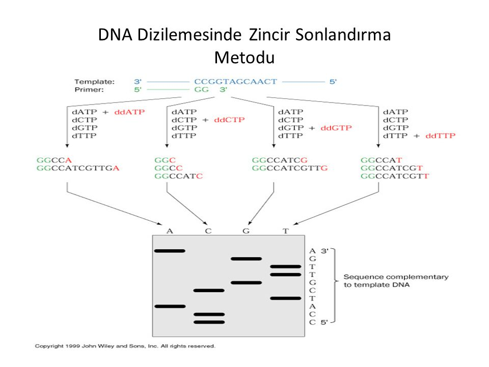 DNA Dizilemesinde Zincir Sonlandırma Metodu