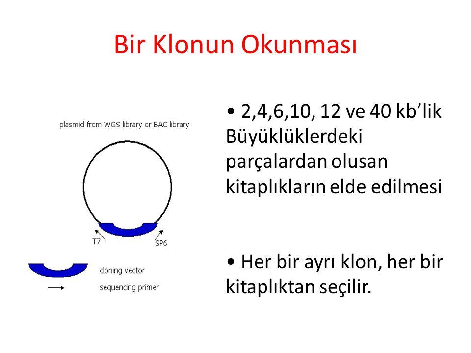 Bir Klonun Okunması • 2,4,6,10, 12 ve 40 kb'lik