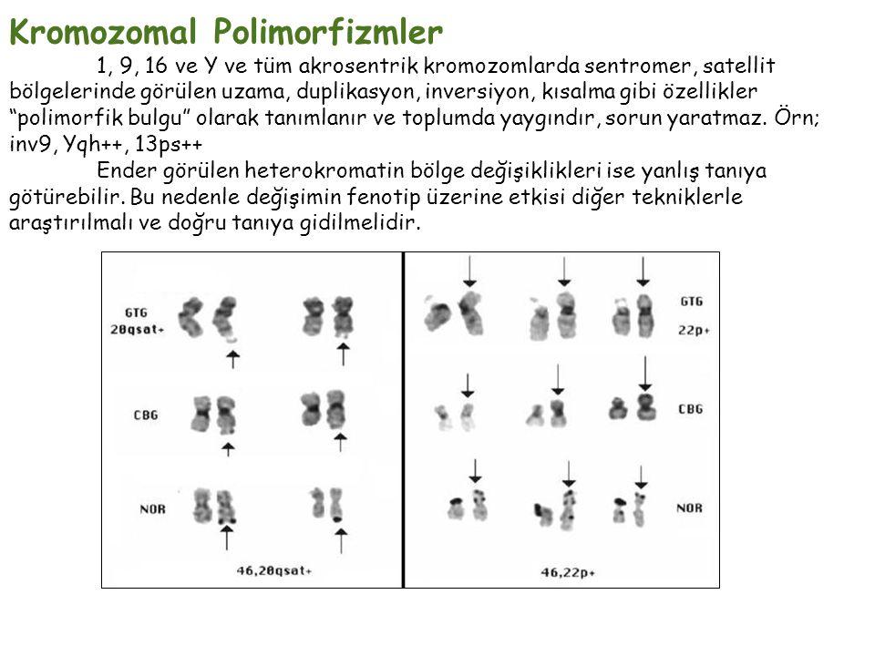Kromozomal Polimorfizmler