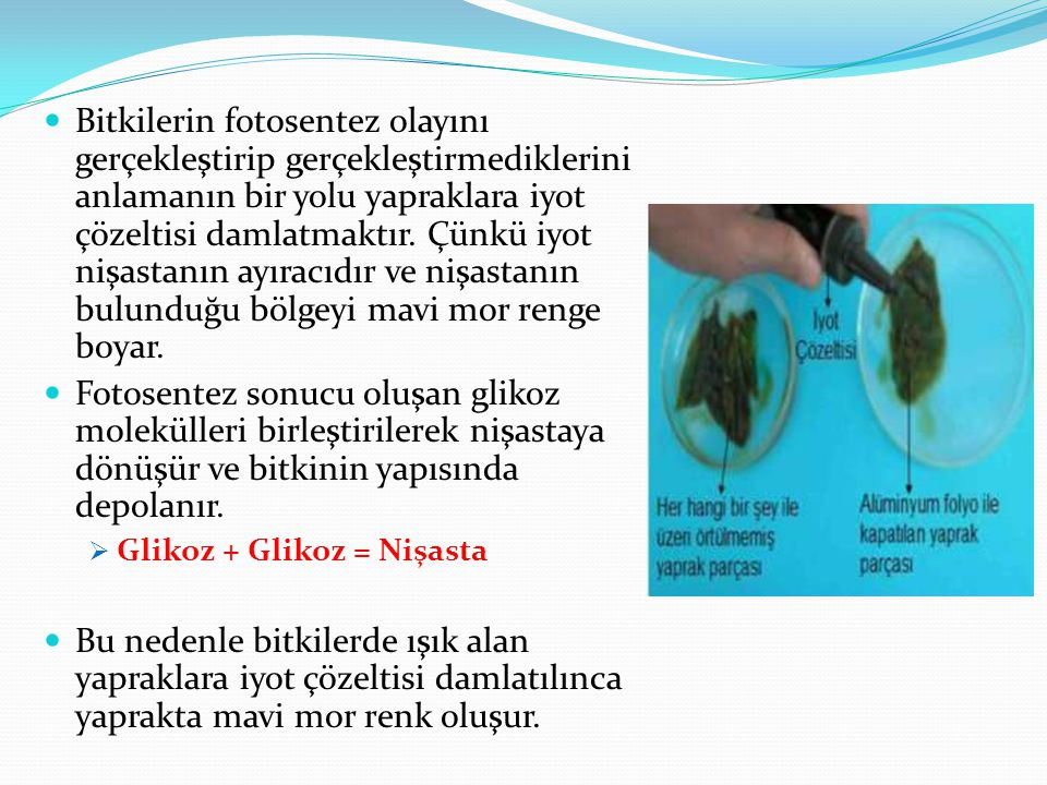 Bitkilerin fotosentez olayını gerçekleştirip gerçekleştirmediklerini anlamanın bir yolu yapraklara iyot çözeltisi damlatmaktır. Çünkü iyot nişastanın ayıracıdır ve nişastanın bulunduğu bölgeyi mavi mor renge boyar.