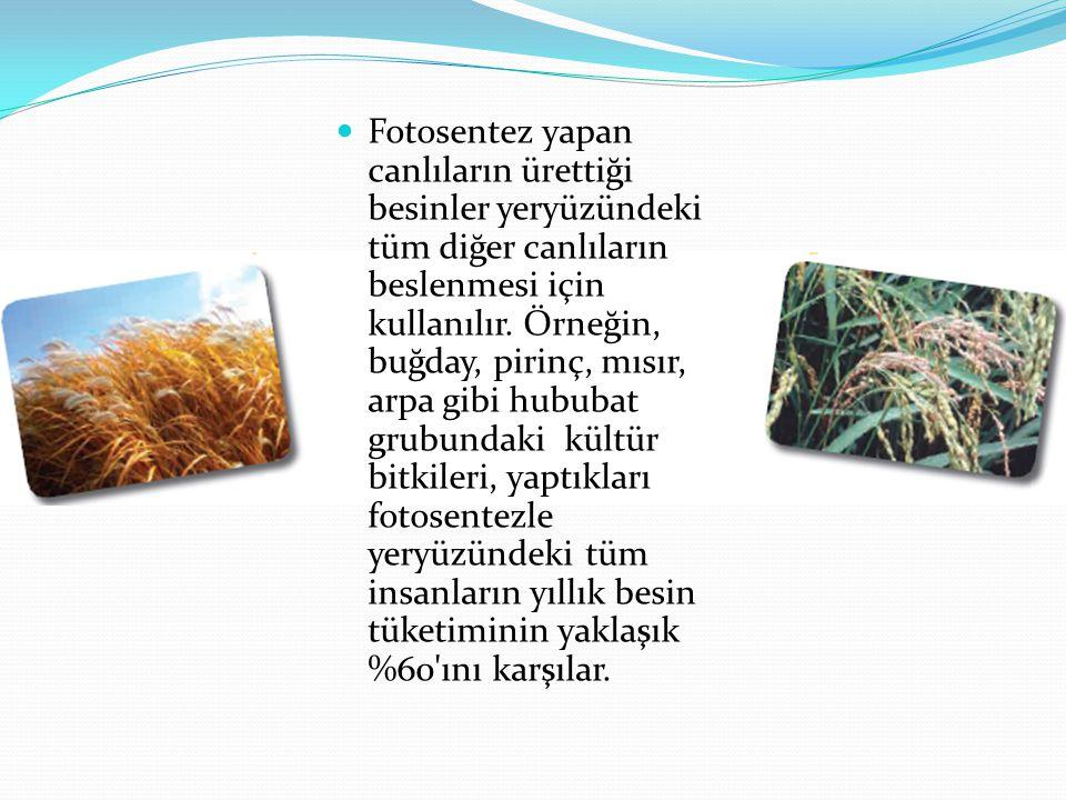 Fotosentez yapan canlıların ürettiği besinler yeryüzündeki tüm diğer canlıların beslenmesi için kullanılır.
