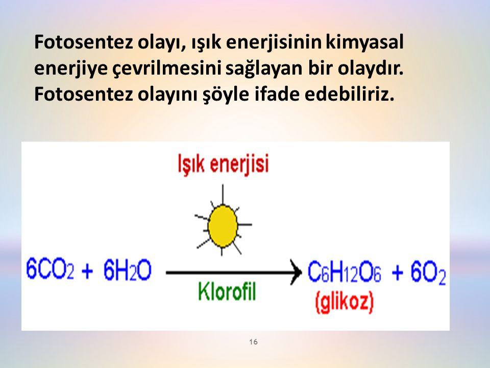 Fotosentez olayı, ışık enerjisinin kimyasal enerjiye çevrilmesini sağlayan bir olaydır.