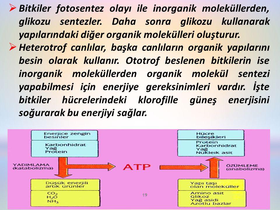 Bitkiler fotosentez olayı ile inorganik moleküllerden, glikozu sentezler. Daha sonra glikozu kullanarak yapılarındaki diğer organik molekülleri oluşturur.
