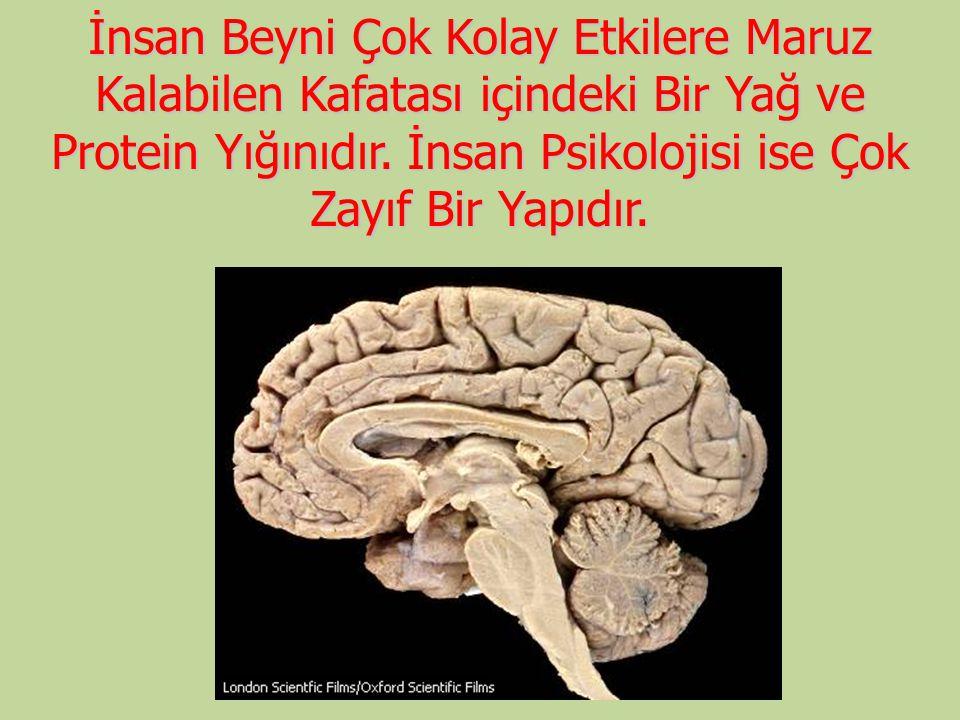 İnsan Beyni Çok Kolay Etkilere Maruz Kalabilen Kafatası içindeki Bir Yağ ve Protein Yığınıdır.
