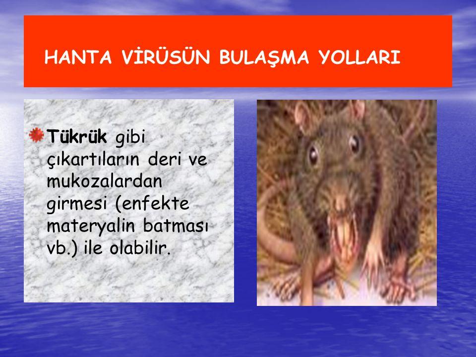 HANTA VİRÜSÜN BULAŞMA YOLLARI