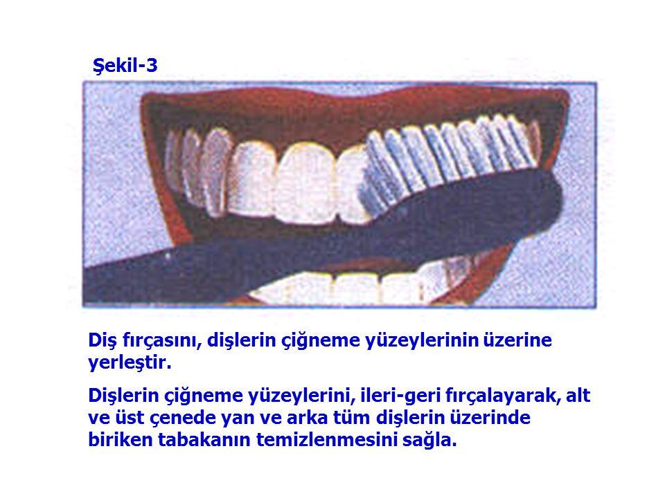Şekil-3 Diş fırçasını, dişlerin çiğneme yüzeylerinin üzerine yerleştir.
