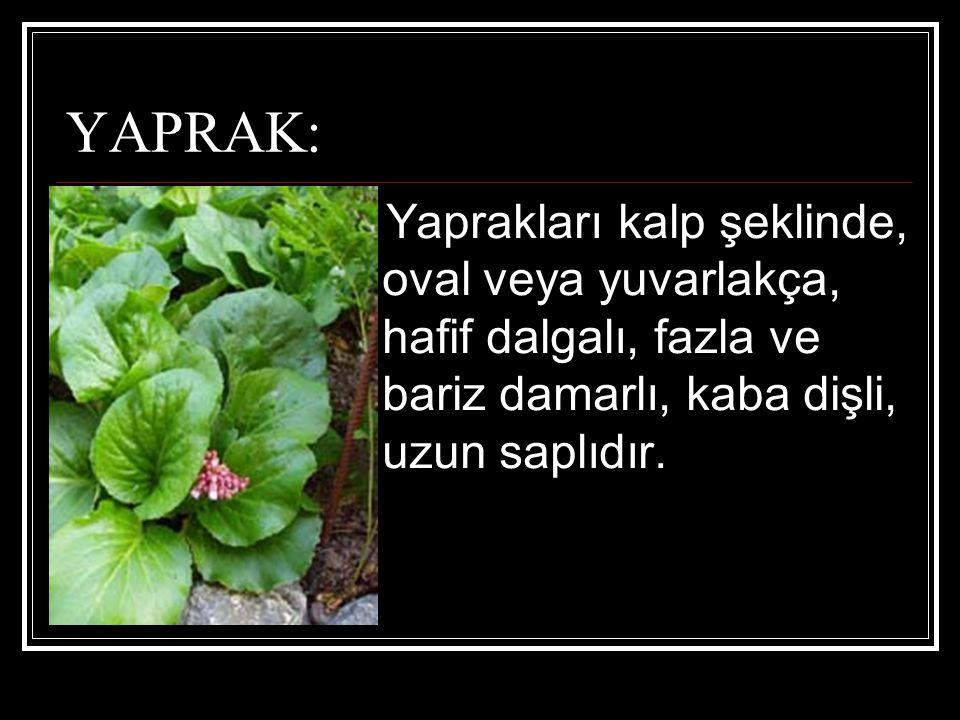 YAPRAK: Yaprakları kalp şeklinde, oval veya yuvarlakça, hafif dalgalı, fazla ve bariz damarlı, kaba dişli, uzun saplıdır.