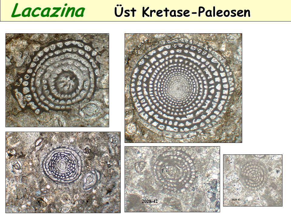 Lacazina Üst Kretase-Paleosen