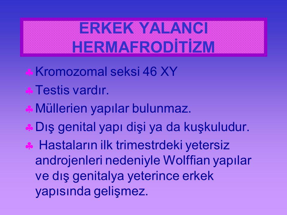 ERKEK YALANCI HERMAFRODİTİZM