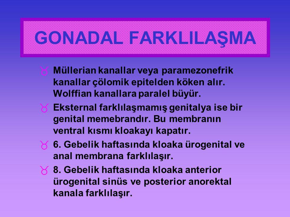 GONADAL FARKLILAŞMA Müllerian kanallar veya paramezonefrik kanallar çölomik epitelden köken alır. Wolffian kanallara paralel büyür.
