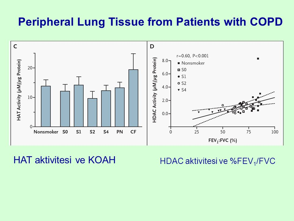 Peripheral Lung Tissue from Patients with COPD