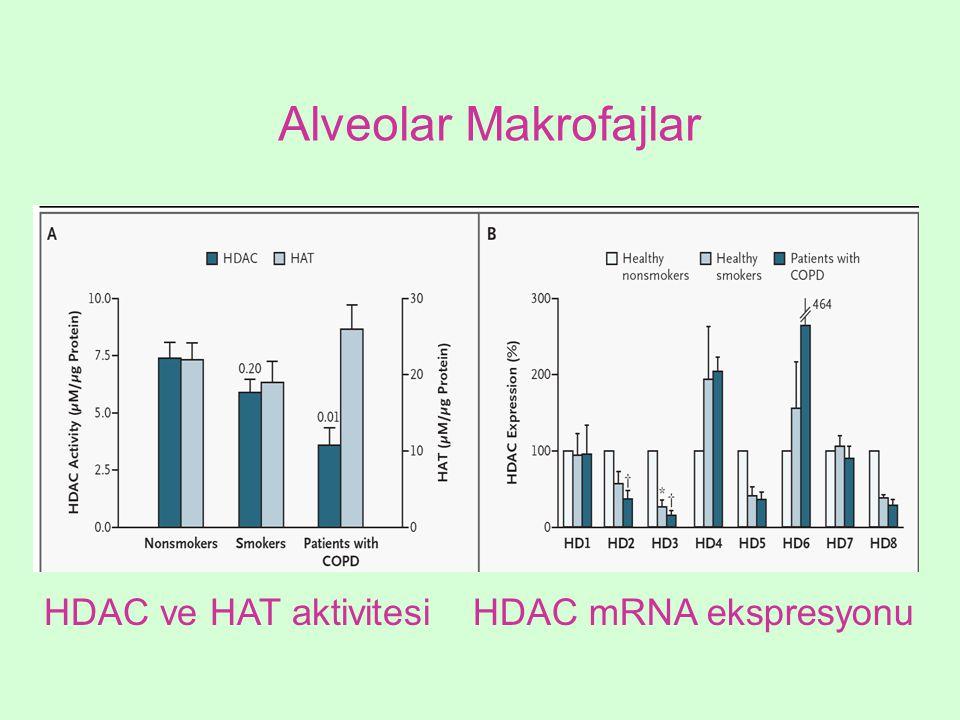 Alveolar Makrofajlar HDAC ve HAT aktivitesi HDAC mRNA ekspresyonu