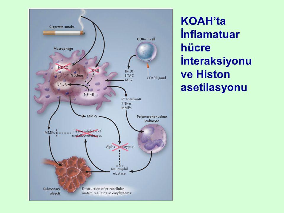 ve Histon asetilasyonu