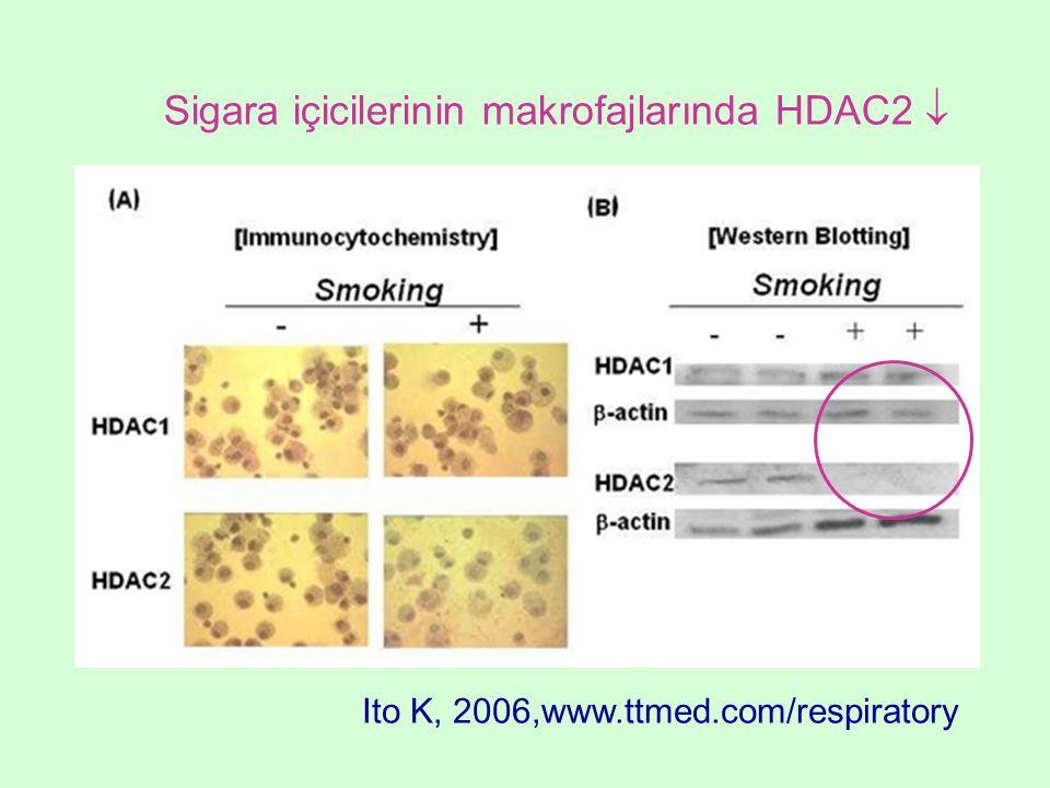 Sigara içicilerinin makrofajlarında HDAC2 