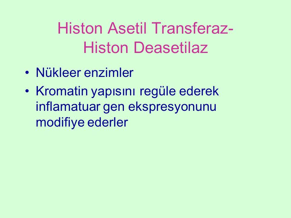 Histon Asetil Transferaz- Histon Deasetilaz