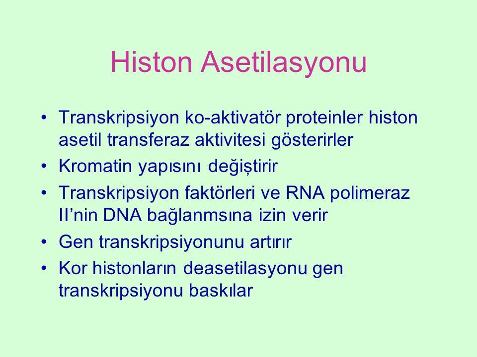 Histon Asetilasyonu Transkripsiyon ko-aktivatör proteinler histon asetil transferaz aktivitesi gösterirler.