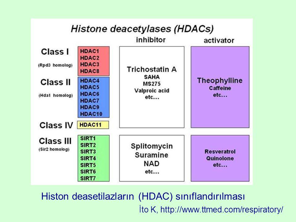 Histon deasetilazların (HDAC) sınıflandırılması