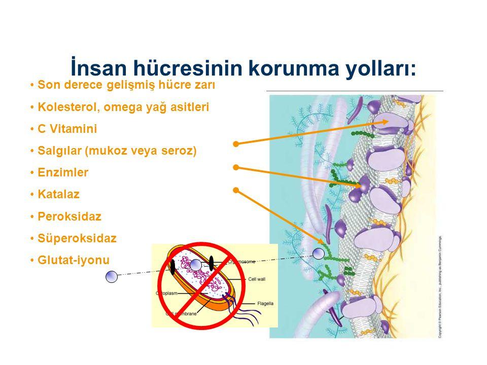 İnsan hücresinin korunma yolları:
