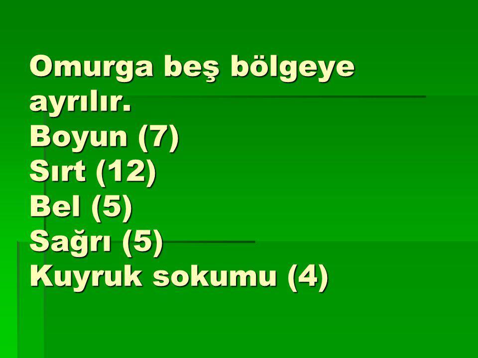 Omurga beş bölgeye ayrılır