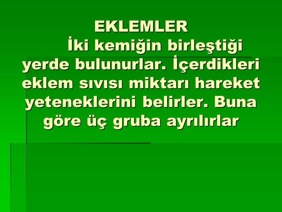 EKLEMLER. İki kemiğin birleştiği yerde bulunurlar