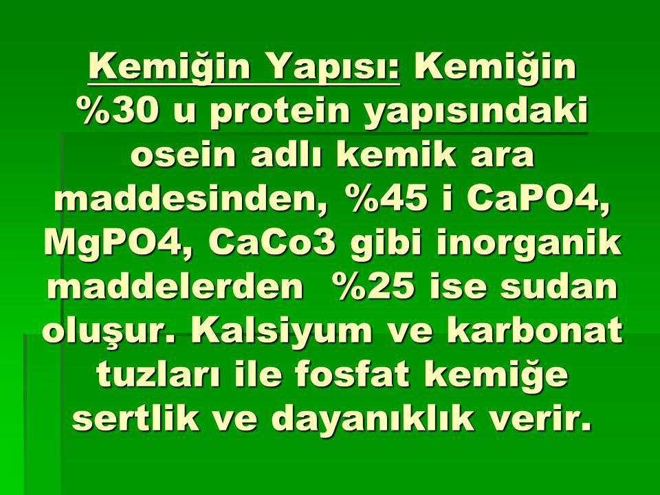 Kemiğin Yapısı: Kemiğin %30 u protein yapısındaki osein adlı kemik ara maddesinden, %45 i CaPO4, MgPO4, CaCo3 gibi inorganik maddelerden %25 ise sudan oluşur.