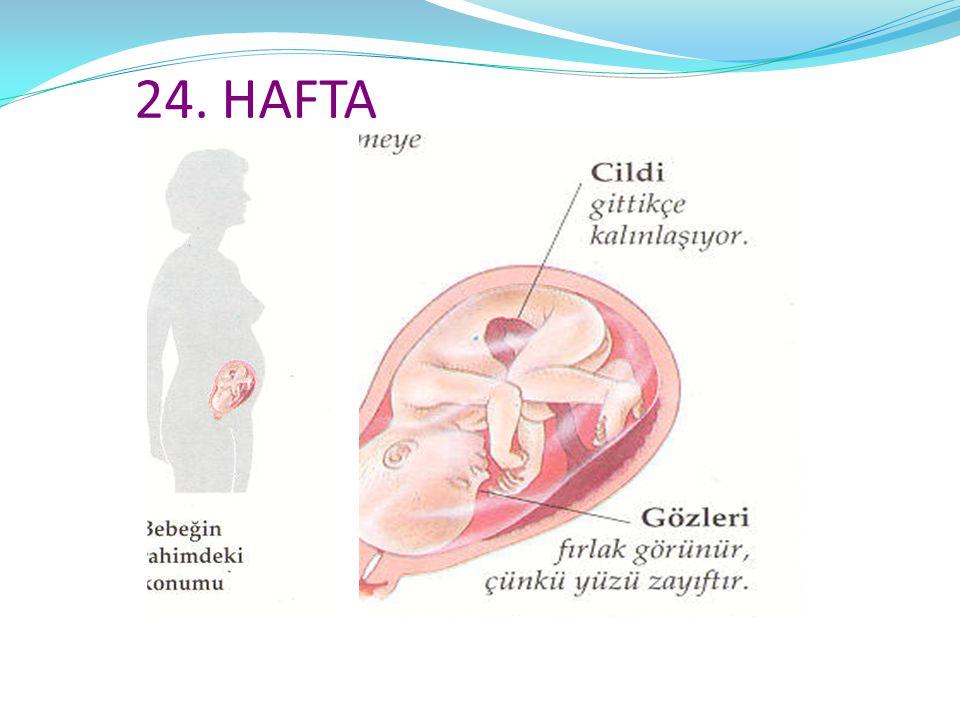 24. HAFTA