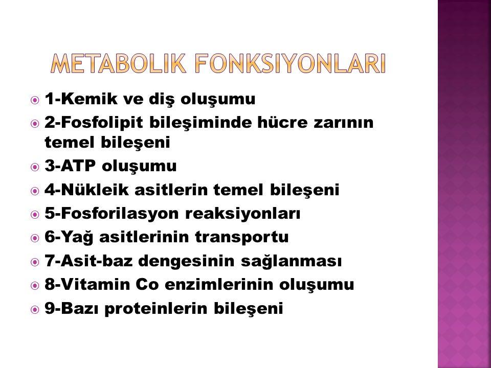Metabolik fonksiyonlarI