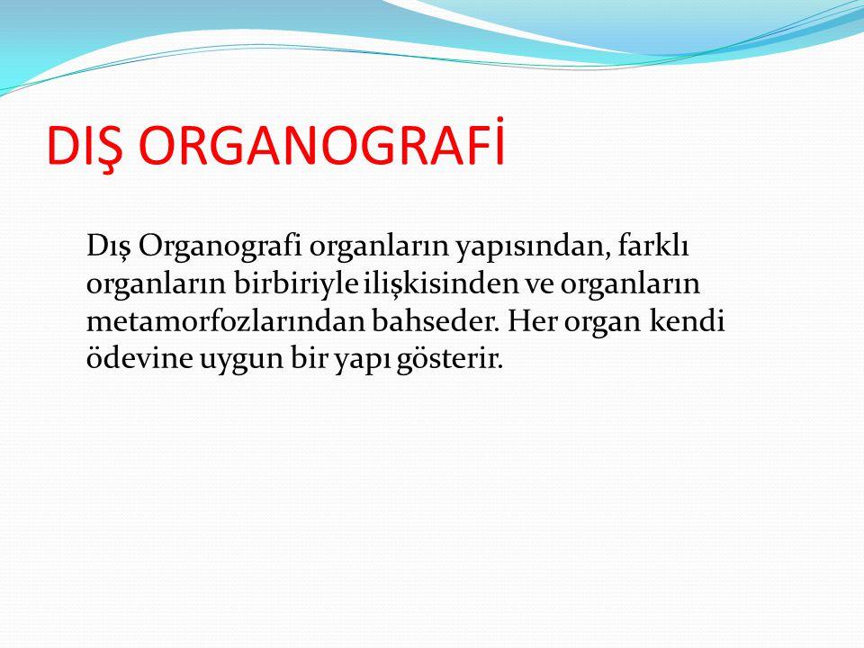 DIŞ ORGANOGRAFİ