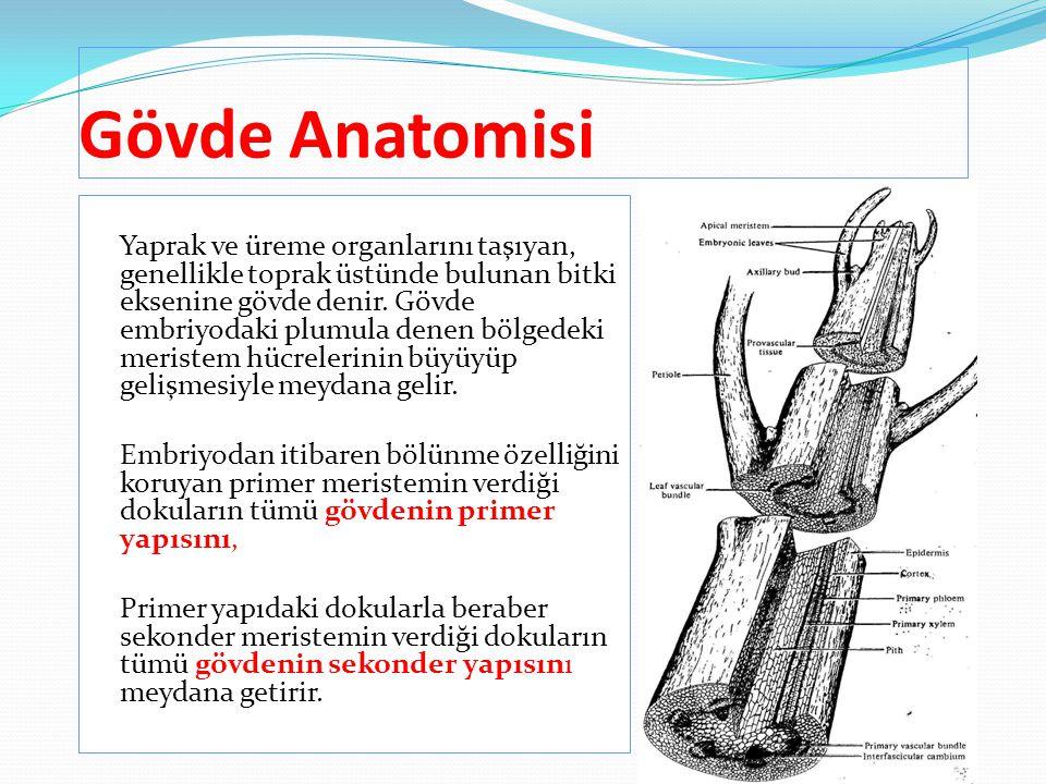 Gövde Anatomisi
