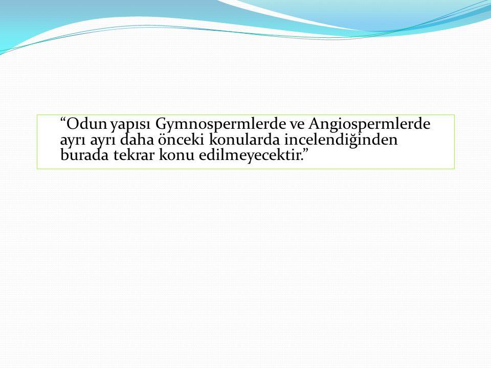 Odun yapısı Gymnospermlerde ve Angiospermlerde ayrı ayrı daha önceki konularda incelendiğinden burada tekrar konu edilmeyecektir.