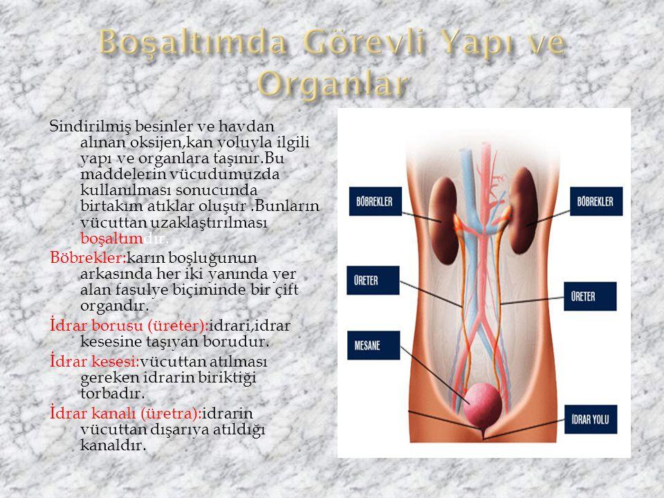 Boşaltımda Görevli Yapı ve Organlar