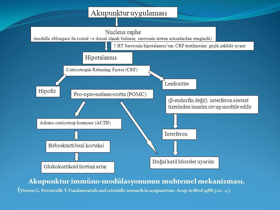Akupunktur immüno-modülasyonunun muhtemel mekanizması.