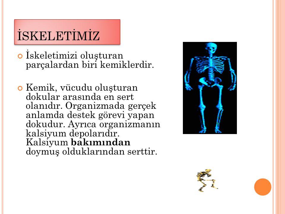İSKELETİMİZ İskeletimizi oluşturan parçalardan biri kemiklerdir.