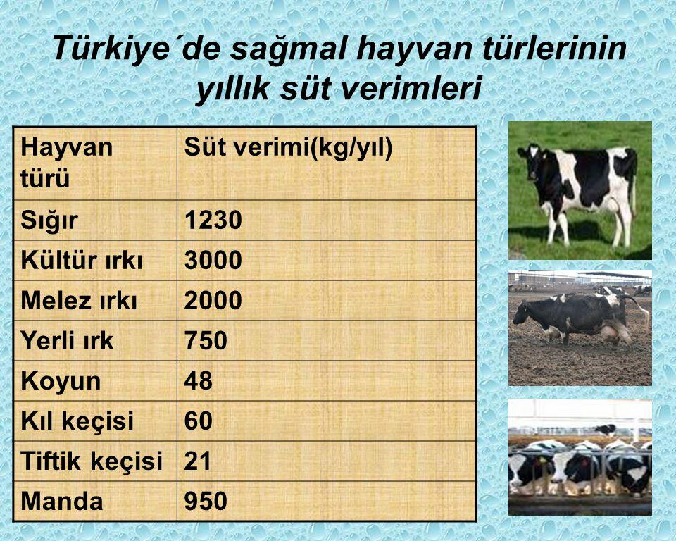 Türkiye´de sağmal hayvan türlerinin yıllık süt verimleri