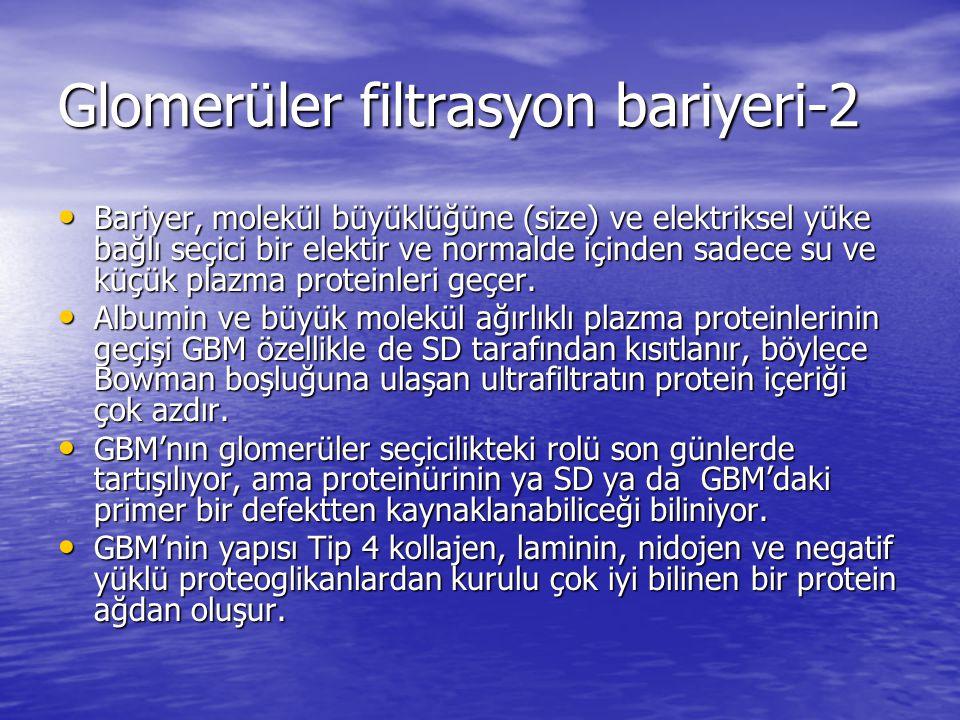 Glomerüler filtrasyon bariyeri-2