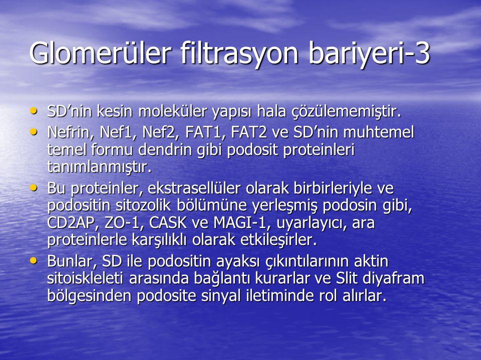 Glomerüler filtrasyon bariyeri-3
