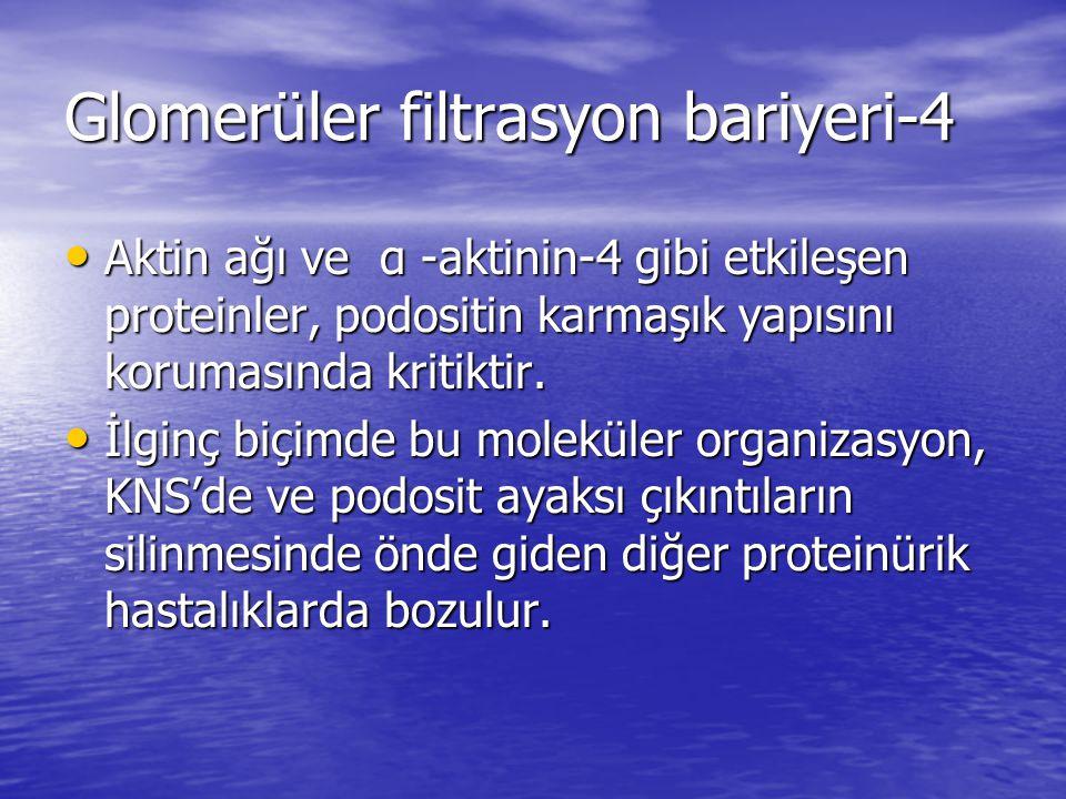 Glomerüler filtrasyon bariyeri-4