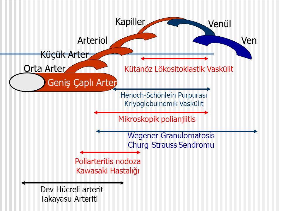 Kapiller Venül Arteriol Ven Küçük Arter Orta Arter Geniş Çaplı Arter