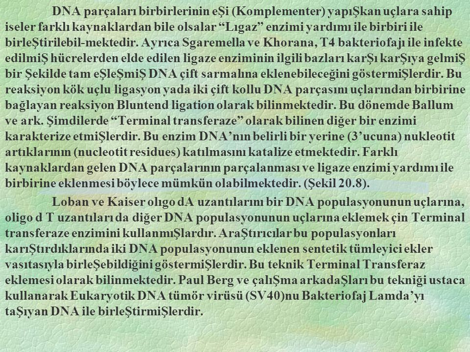 DNA parçaları birbirlerinin eŞi (Komplementer) yapıŞkan uçlara sahip iseler farklı kaynaklardan bile olsalar Lıgaz enzimi yardımı ile birbiri ile birleŞtirilebil-mektedir. Ayrıca Sgaremella ve Khorana, T4 bakteriofajı ile infekte edilmiŞ hücrelerden elde edilen ligaze enziminin ilgili bazları karŞı karŞıya gelmiŞ bir Şekilde tam eŞleŞmiŞ DNA çift sarmalına eklenebileceğini göstermiŞlerdir. Bu reaksiyon kök uçlu ligasyon yada iki çift kollu DNA parçasını uçlarından birbirine bağlayan reaksiyon Bluntend ligation olarak bilinmektedir. Bu dönemde Ballum ve ark. Şimdilerde Terminal transferaze olarak bilinen diğer bir enzimi karakterize etmiŞlerdir. Bu enzim DNA'nın belirli bir yerine (3'ucuna) nukleotit artıklarının (nucleotit residues) katılmasını katalize etmektedir. Farklı kaynaklardan gelen DNA parçalarının parçalanması ve ligaze enzimi yardımı ile birbirine eklenmesi böylece mümkün olabilmektedir. (Şekil 20.8).