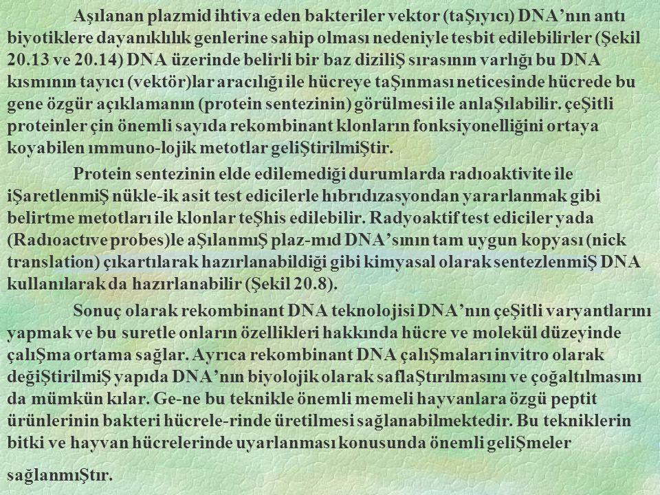 Aşılanan plazmid ihtiva eden bakteriler vektor (taŞıyıcı) DNA'nın antı biyotiklere dayanıklılık genlerine sahip olması nedeniyle tesbit edilebilirler (Şekil 20.13 ve 20.14) DNA üzerinde belirli bir baz diziliŞ sırasının varlığı bu DNA kısmının tayıcı (vektör)lar aracılığı ile hücreye taŞınması neticesinde hücrede bu gene özgür açıklamanın (protein sentezinin) görülmesi ile anlaŞılabilir. çeŞitli proteinler çin önemli sayıda rekombinant klonların fonksiyonelliğini ortaya koyabilen ımmuno-lojik metotlar geliŞtirilmiŞtir.